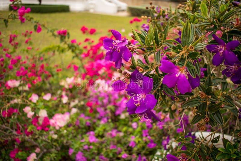 Härliga blommor i trädgården arkivfoto