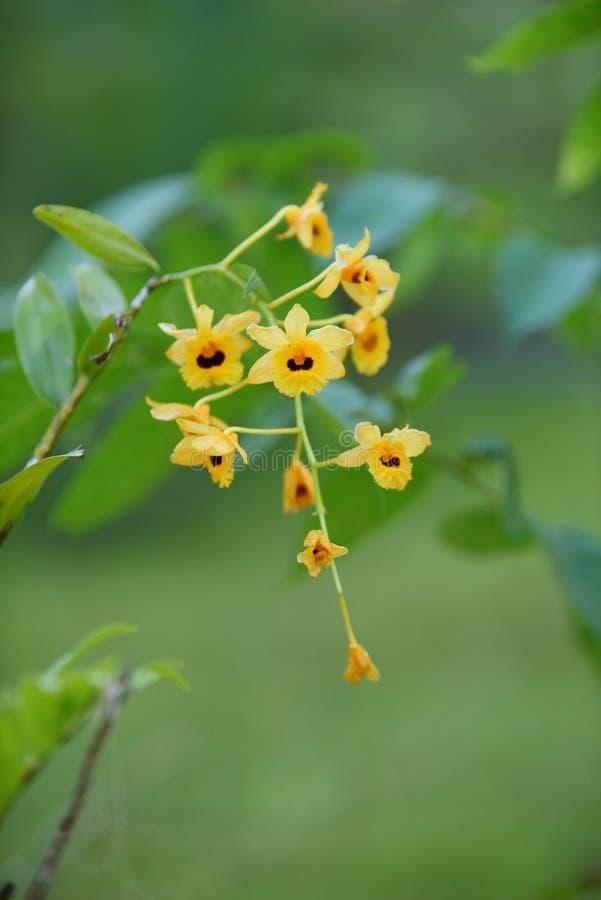 Härliga blommor i trädgården fotografering för bildbyråer