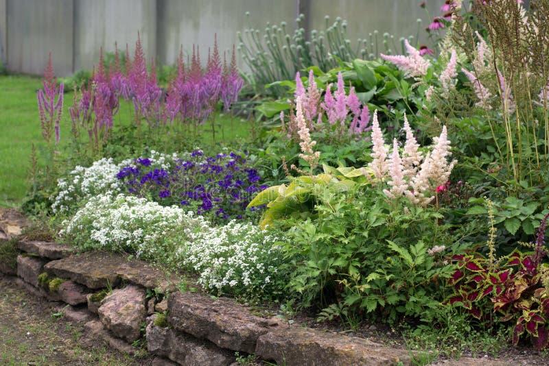 Härliga blommor i trädgården på blomsterrabatten arkivfoton