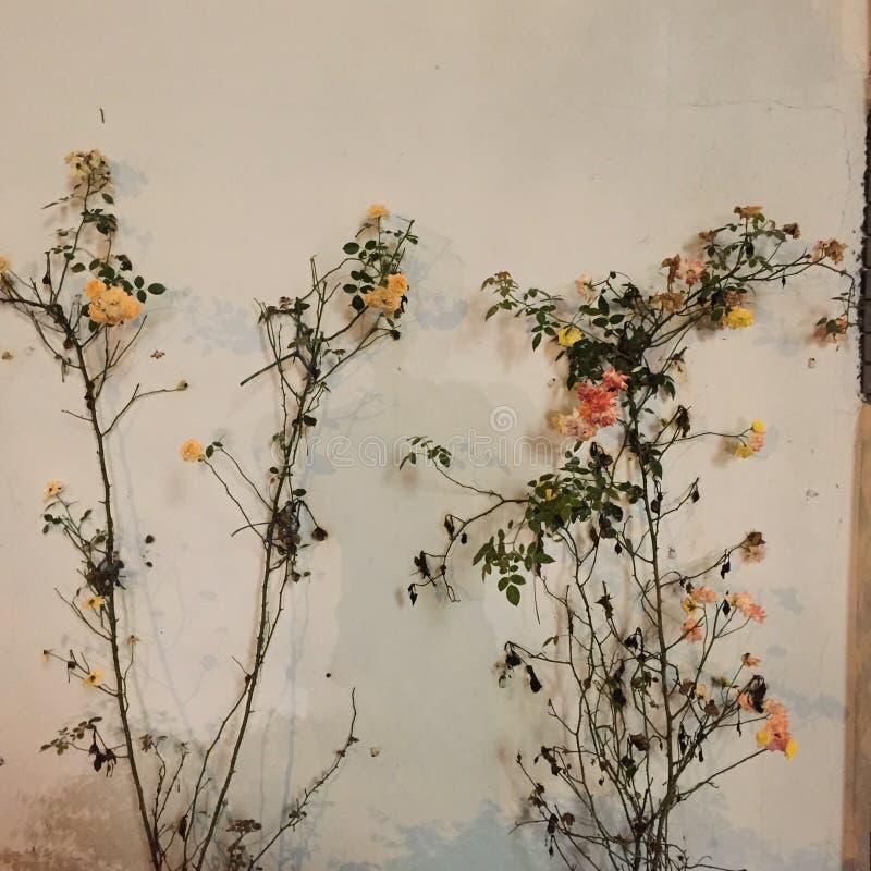Härliga blommor och naturliga växter Utformar blom- bakgrund för blomman Garden royaltyfri illustrationer