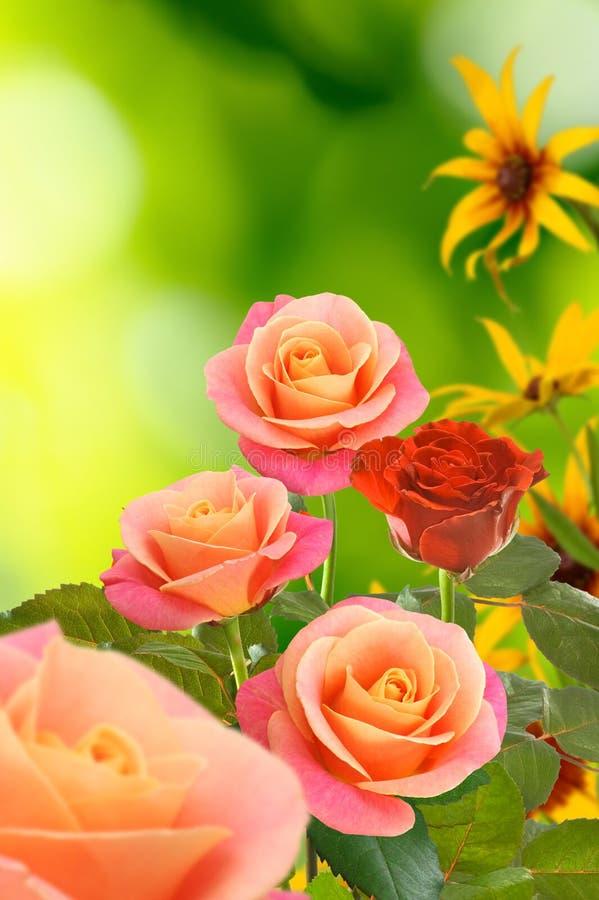 Härliga blommor på en grön bakgrund royaltyfri fotografi