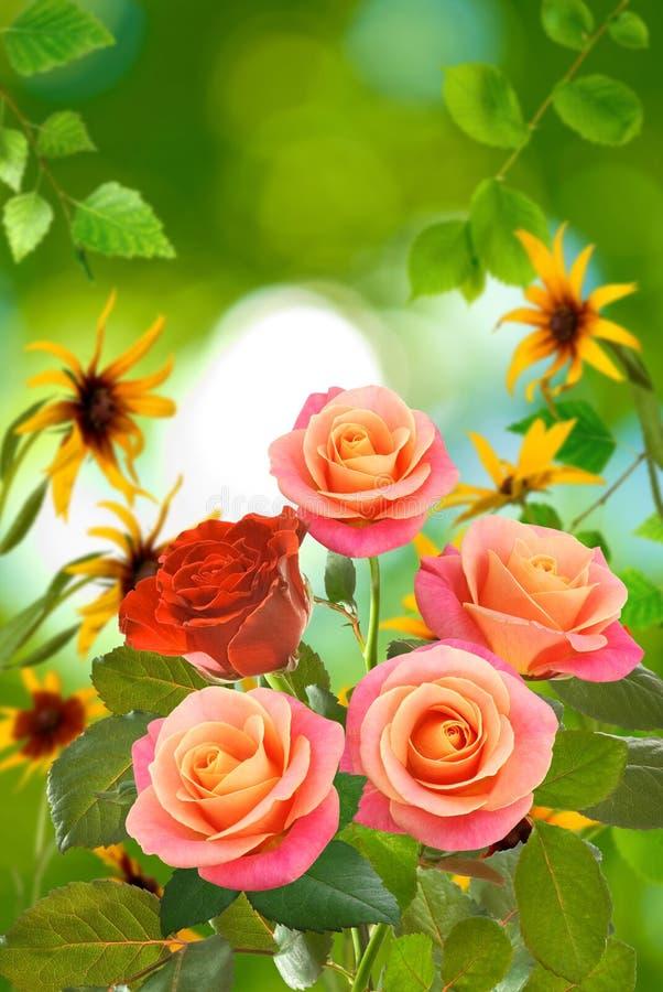 Härliga blommor på en grön bakgrundsnärbild arkivbild