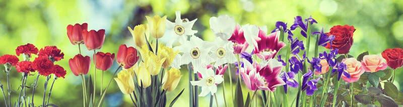 Härliga blommor på en grön bakgrundsnärbild royaltyfri bild