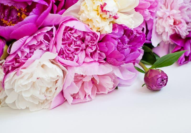 Härliga blommor, pioner på vit bakgrund Den eleganta buketten av m?nga pioner av rosa f?rger f?rgar t?tt upp royaltyfria foton