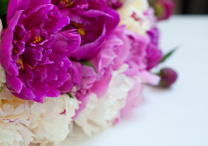 Härliga blommor, pioner på vit bakgrund Den eleganta buketten av m?nga pioner av rosa f?rger f?rgar t?tt upp arkivfoton