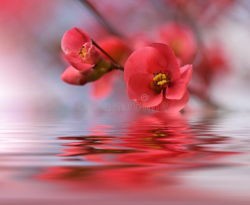 Härliga blommor reflekterade i vattnet, brunnsortbegrepp royaltyfria foton