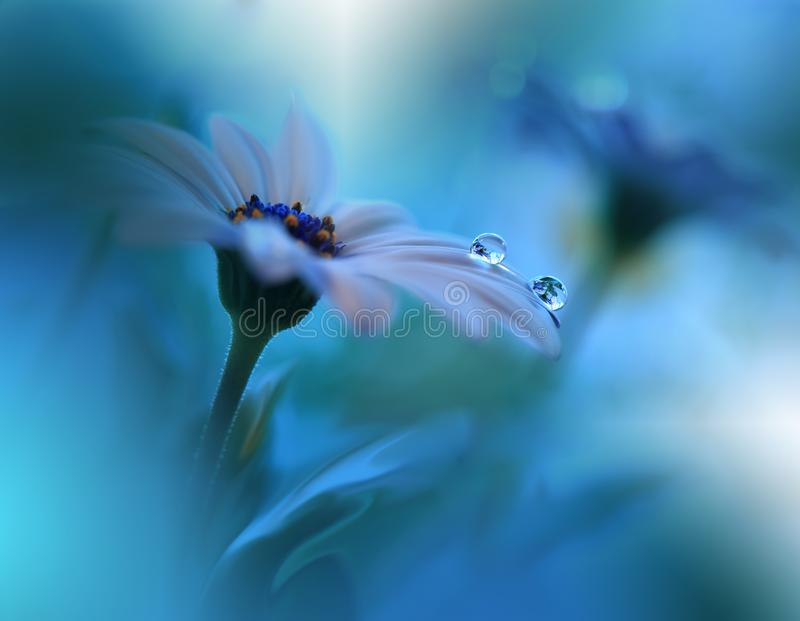Härliga blommor reflekterade i vattnet, havbegrepp Stillsamt abstrakt closeupkonstfotografi Blom- fantasidesign arkivbilder