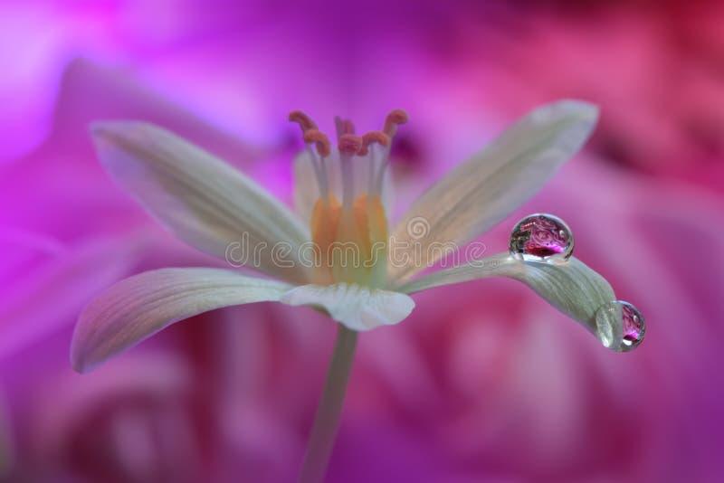 Härliga blommor reflekterade i vattnet, konstnärligt begrepp Stillsamt abstrakt closeupkonstfotografi Blom- fantasidesign