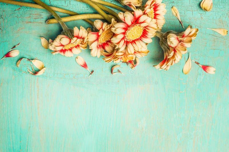 Härliga blommor samlar ihop på en sjaskig chic bakgrund för turkos, den bästa sikten, gräns Festligt hälsning- eller inbjudankort royaltyfri bild