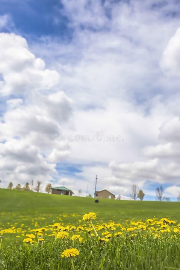 Härliga blommor som blomstrar under överflödande gräs som beskådas på en molnig vårdag arkivfoto