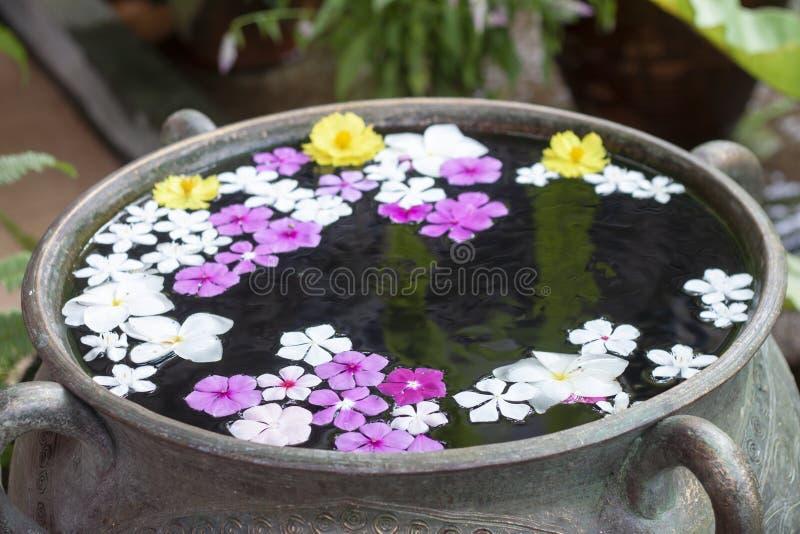 Härliga blommor svävar på yttersidavattnet arkivfoto