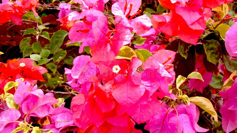 härliga blommor växer och blommar lugna hjärtan Tätt upp, pappersblomma arkivbilder
