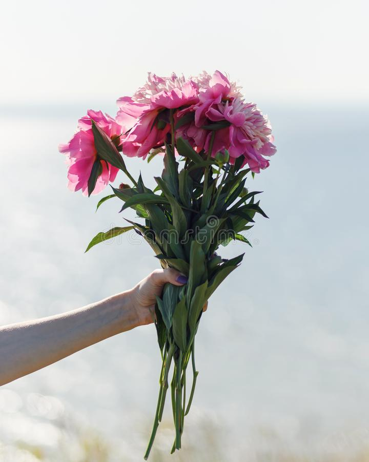 Härliga blomstra rosa pionblommor på naturlig bakgrund Sommar v?rbegrepp h?rlig gjord naturvektor f?r bakgrund royaltyfri bild