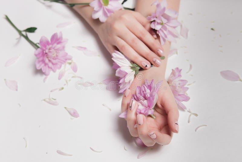 Härliga brunn-ansad sammetkvinnas händer med mjuka rosa blommor för stilfull näck manikyrhåll som sprids på tabellen royaltyfri foto
