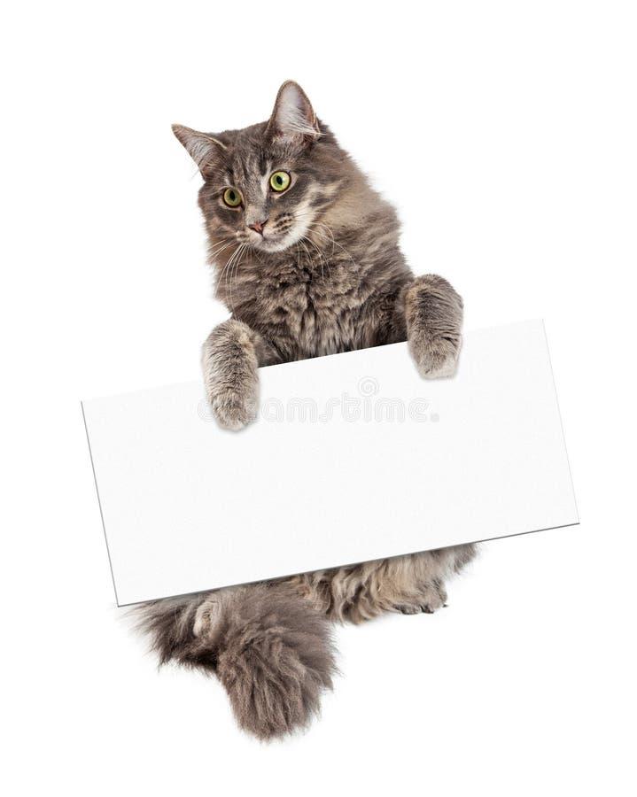 Härliga Cat Holding Blank Sign arkivfoton