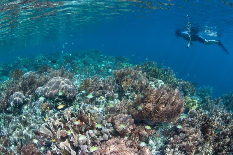 Härliga Coral Reef och Snorkeler i Raja Ampat royaltyfri bild