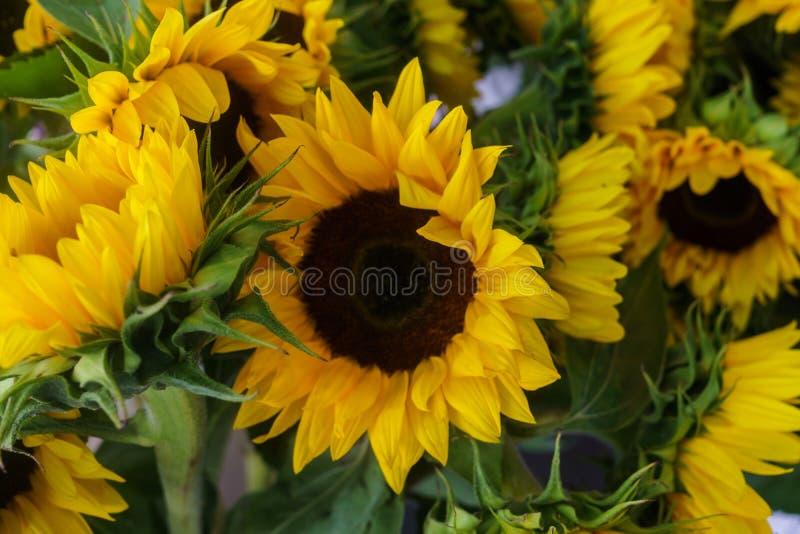 Härliga dekorativa solrosor som används för framställning av buketter royaltyfri bild