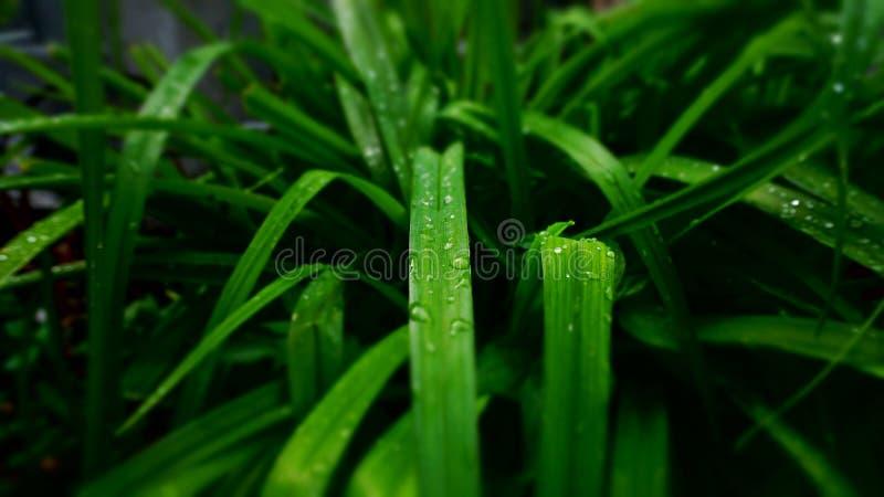 Härliga droppar på gräs efter regn i trädgården arkivfoton