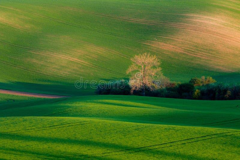 Härliga fält i vår arkivbilder