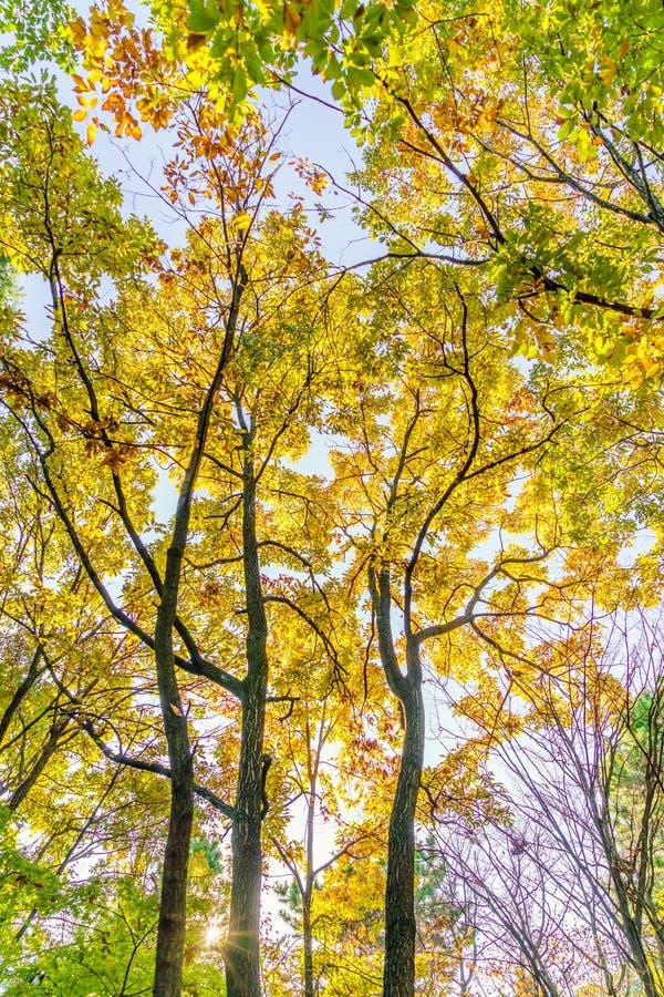 'Härliga färgrika Autumn Leaves royaltyfri bild