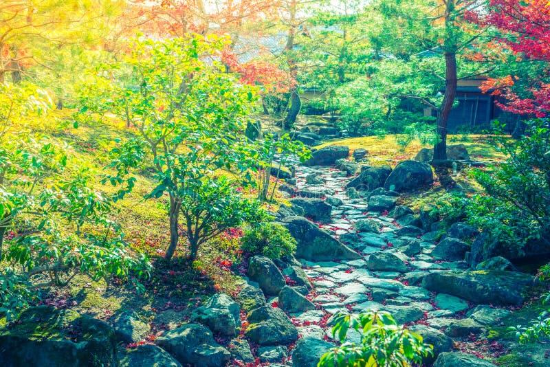 Härliga färgrika Autumn Leaves (filtrerad bilden bearbetad vint arkivfoton