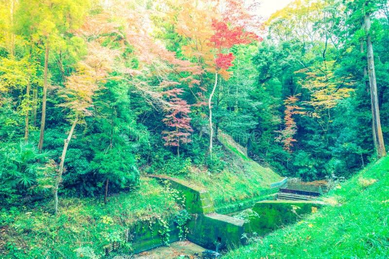 Härliga färgrika Autumn Leaves (filtrerad bilden bearbetad vint arkivbilder