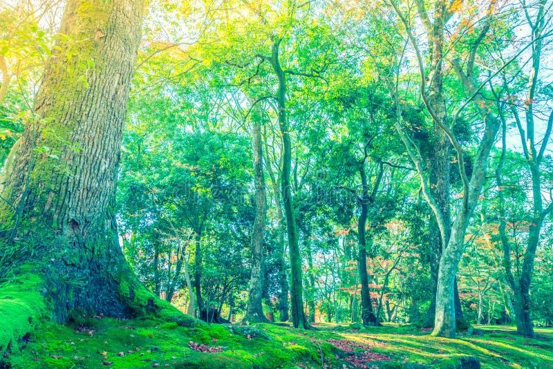 Härliga färgrika Autumn Leaves (filtrerad bilden bearbetad vint fotografering för bildbyråer