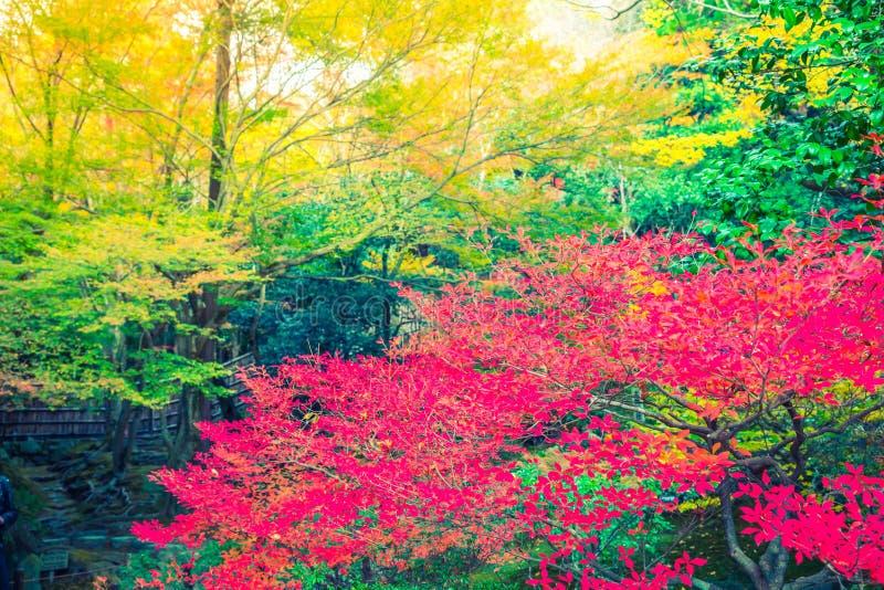 Härliga färgrika Autumn Leaves (filtrerad bilden bearbetad vint royaltyfria foton