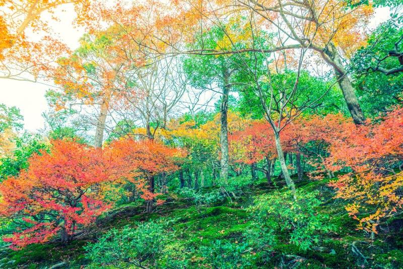 Härliga färgrika Autumn Leaves (filtrerad bilden bearbetad vint royaltyfri bild