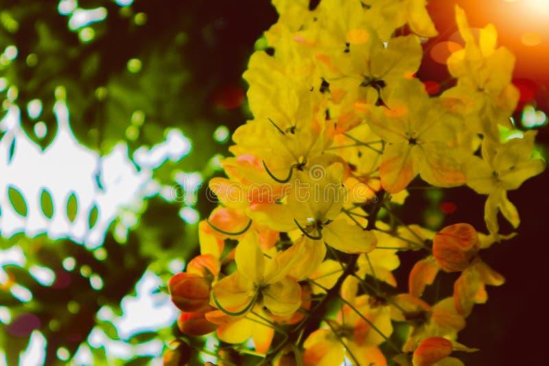 Härliga färgrika rosa och gula blommor och den gröna skogen för naturväxtträd i den offentliga trädgården och den gröna staden pa arkivbild