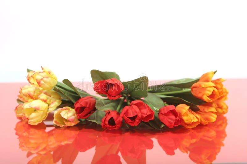 härliga färgrika tulpan royaltyfri foto