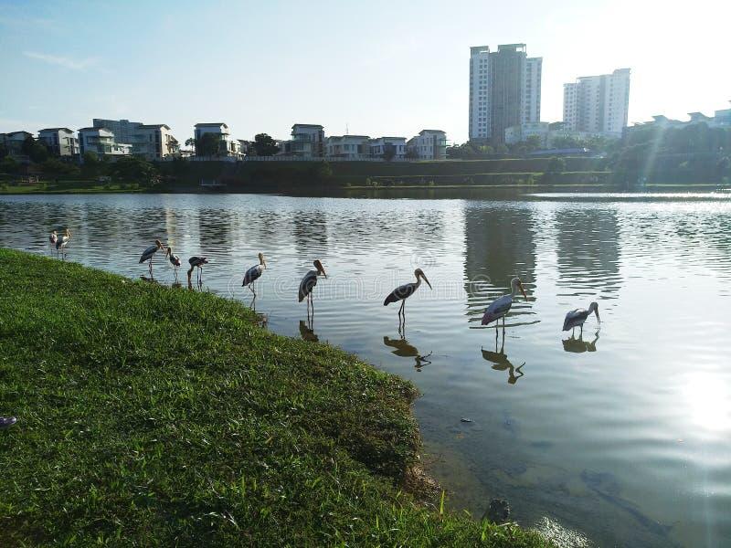 Härliga fåglar för solnedgångsjösida som ställer upp det scenary landskapet royaltyfria bilder