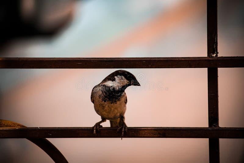 Härliga fåglar i regnig säsong royaltyfri bild