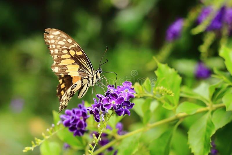 Härliga fjärilar och blommor arkivbild