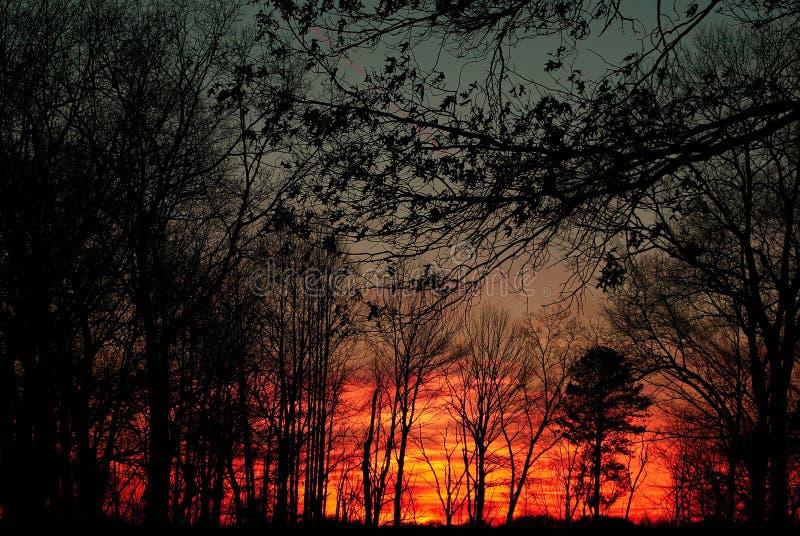 Härliga Forest Sunset arkivfoto
