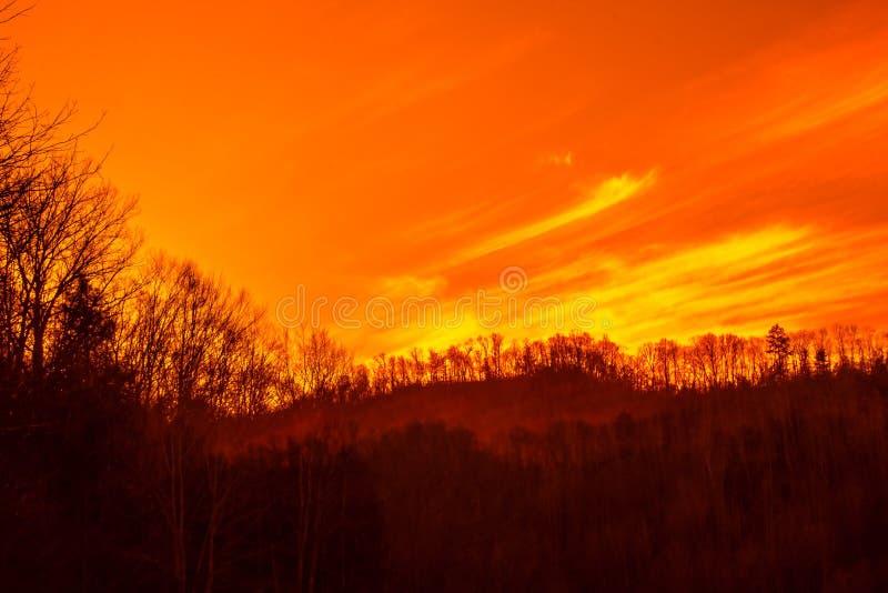 Härliga Forest Sunset arkivfoton