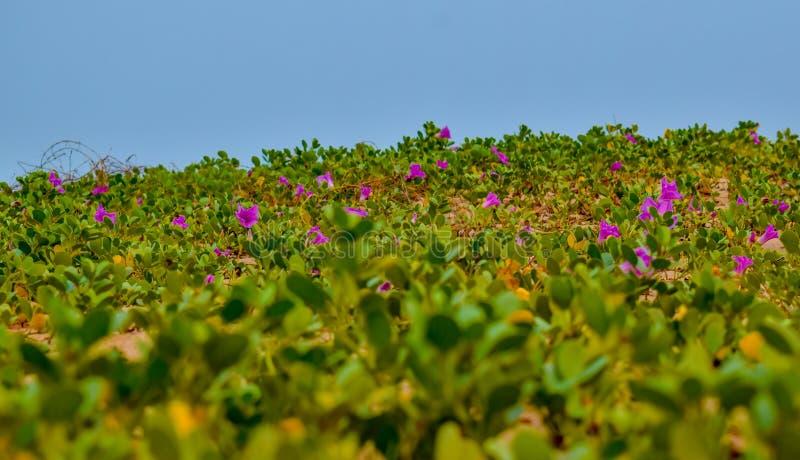 Härliga gräs och blommor på en strand royaltyfri foto