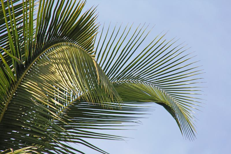 Härliga gröna palmblad Tropiskt exotiskt landskap Design w arkivbilder