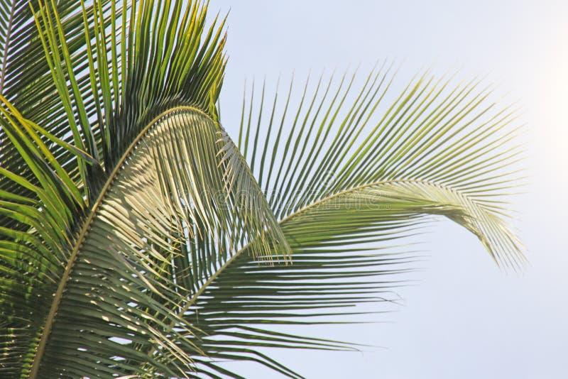 Härliga gröna palmblad Tropiskt exotiskt landskap Design w arkivfoto