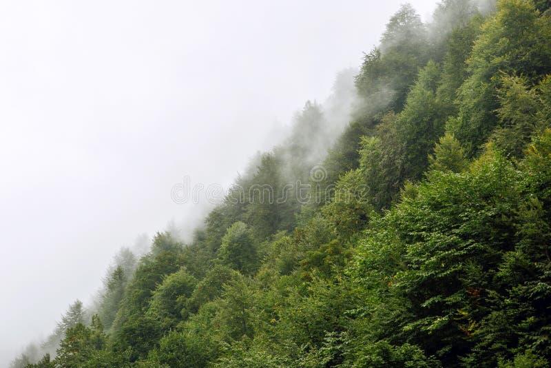 Härliga gröna träd på en kulle i dimman i bergen av Sochi arkivfoto