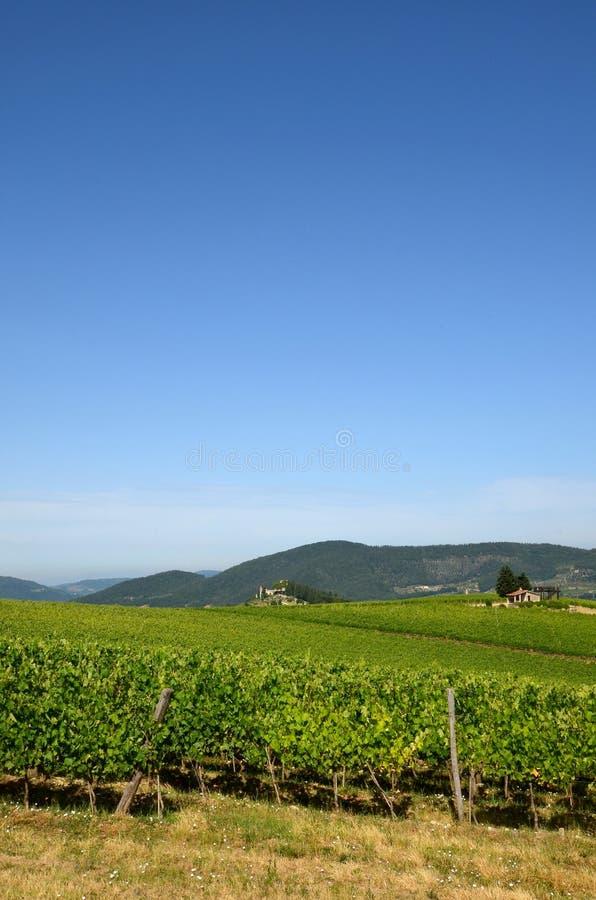 Härliga gröna Wineyards i Tuscany, Chianti, Italien arkivbilder