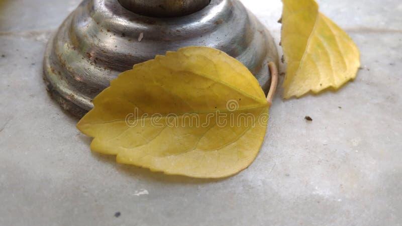 Härliga gula blad royaltyfri fotografi