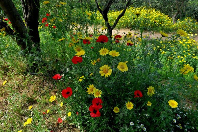 Härliga gula tusenskönor och röda vallmo i skogcloseupen royaltyfria bilder