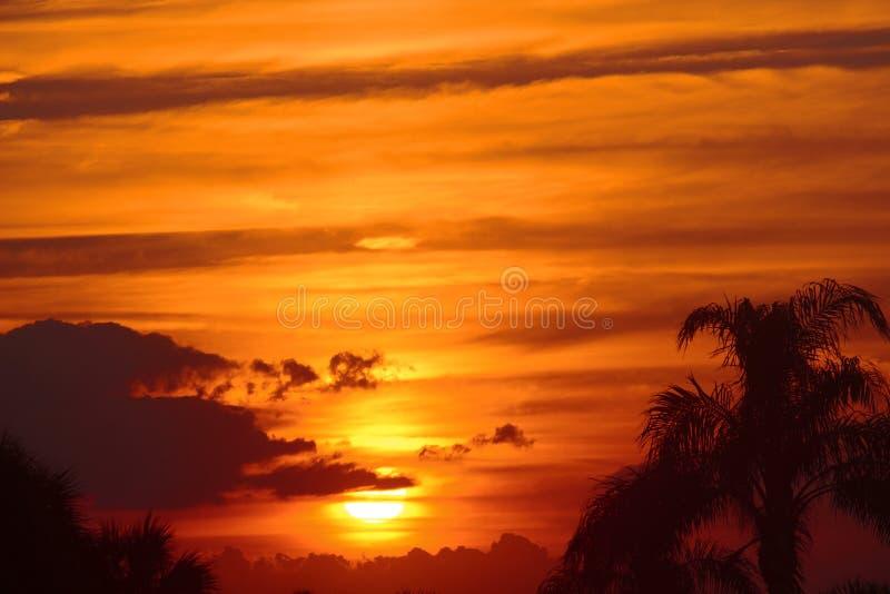 Härliga guld- Maui, Hawaii solnedgång med palmträd royaltyfria foton