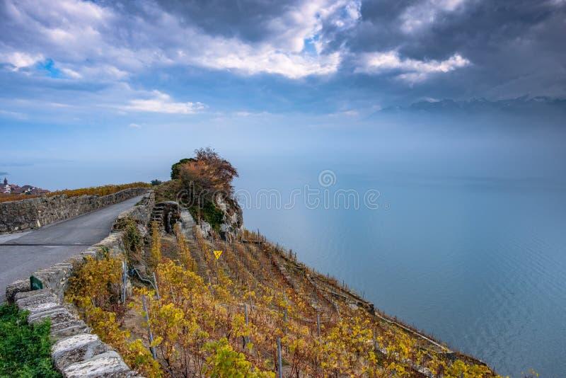 Härliga höstfärger på terrasserna av de Lavaux vingårdarna i Schweiz och dimmiga mörka orosmoln över sjöGenève royaltyfria foton
