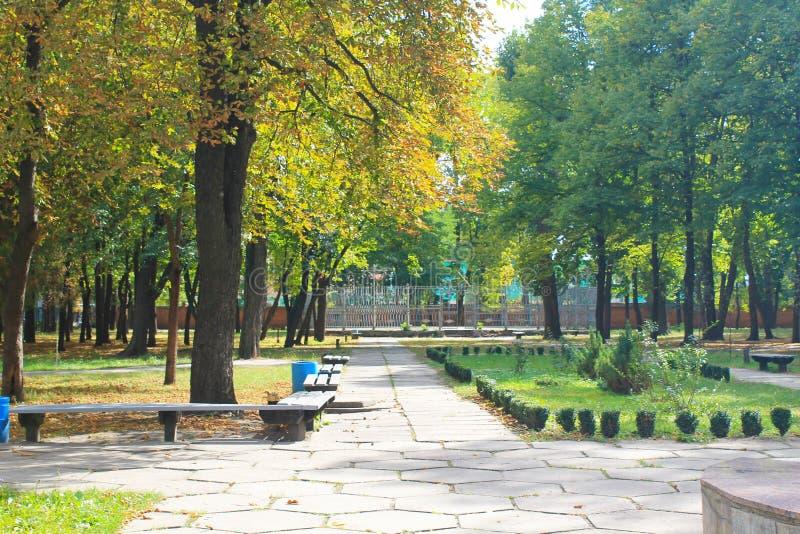 Härliga höstträd i stad parkerar royaltyfria bilder