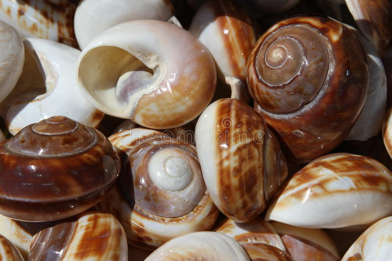 Härliga havsskal som samlas i havet arkivfoton