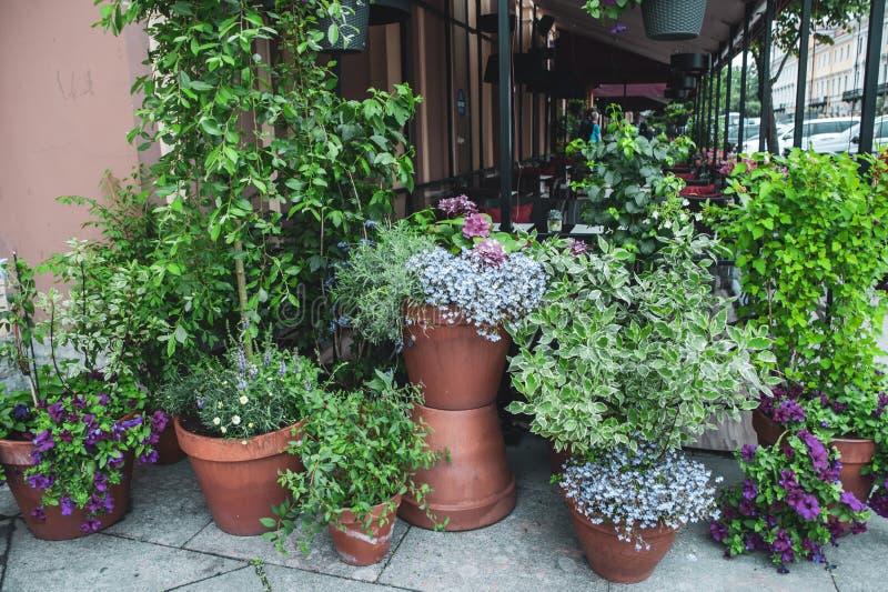 härliga inlagda växter utanför ett gatakafé royaltyfri foto