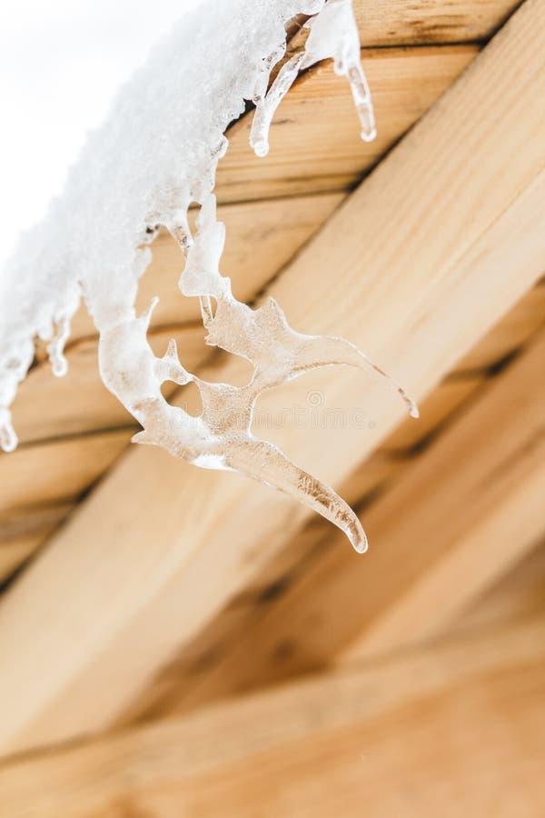 Härliga istappar i konstig formmelt på trätaket med vatten tappar kommande isolerad skjuten fjäderstudiowhite royaltyfria foton