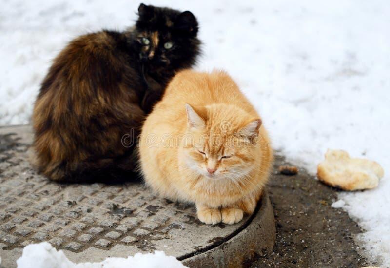 Härliga katter svärtar och rävaktig färg på gatan i vinter arkivfoto
